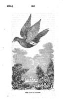 265. oldal