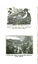 54. oldal