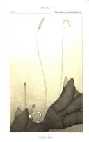 274. oldal