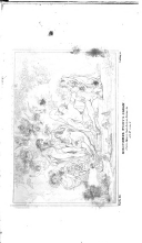 183. oldal